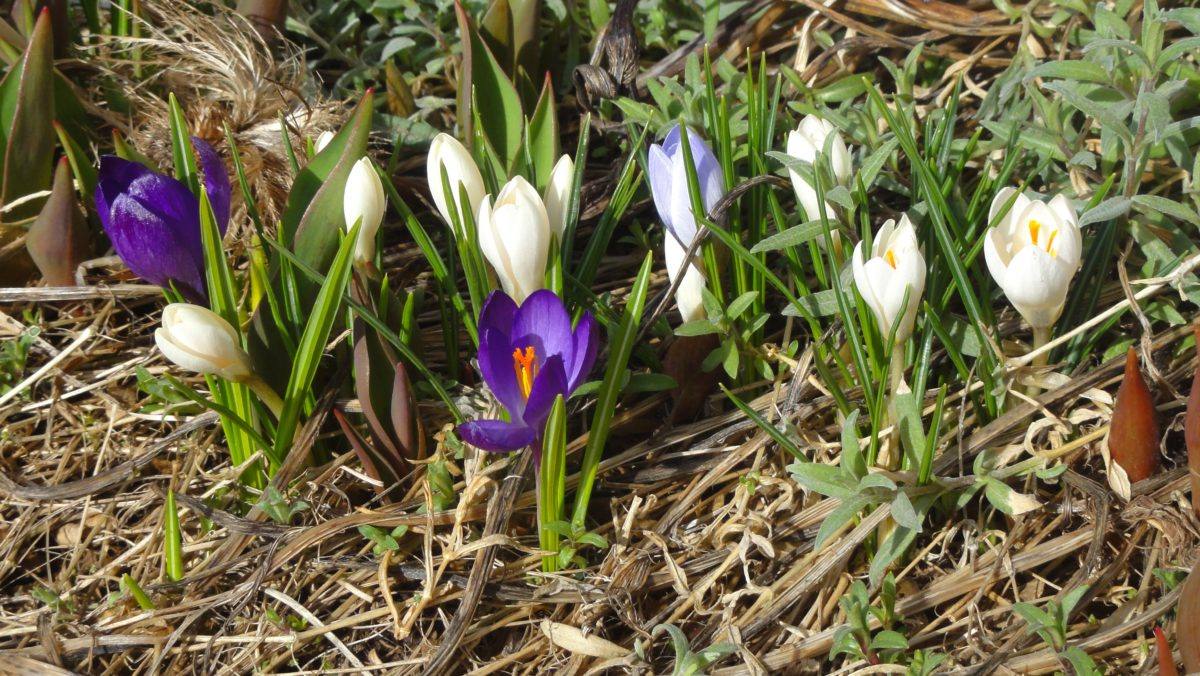 Frühling, Frühling!